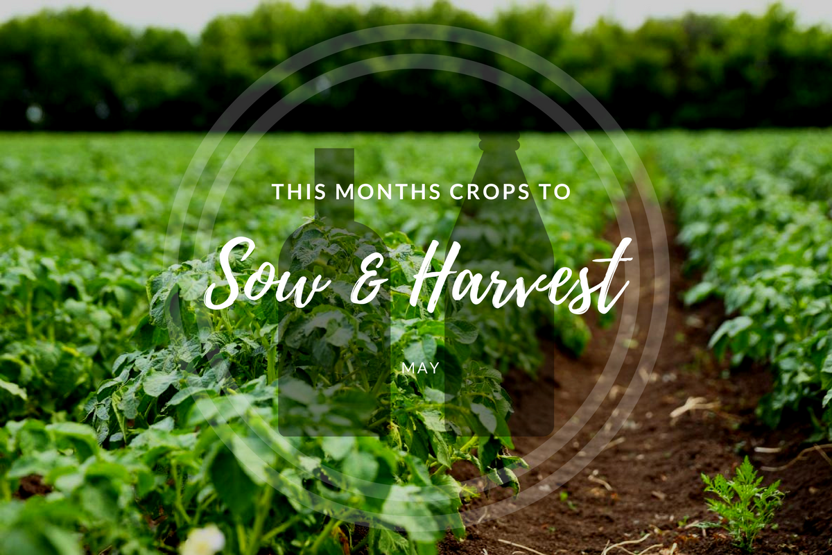 This month's crops to sow and harvest.