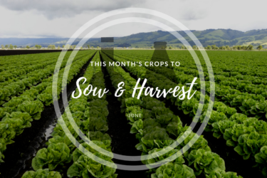 This month's crops to sow and harvest (June).