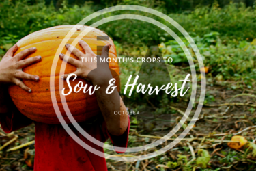 This month's crops to sow and harvest (October).