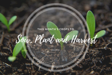 This month's crops to sow and harvest (March).