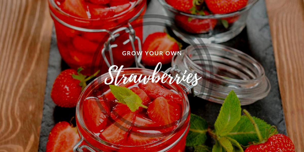 A strawberry window garden